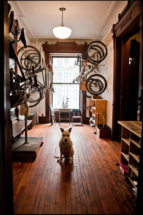 bici+cane