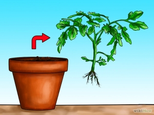 670px-Grow-Tomatoes-Upside-Down-Step-4