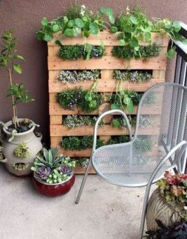 pallett piante