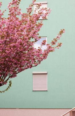 pianta fiorita muro celeste