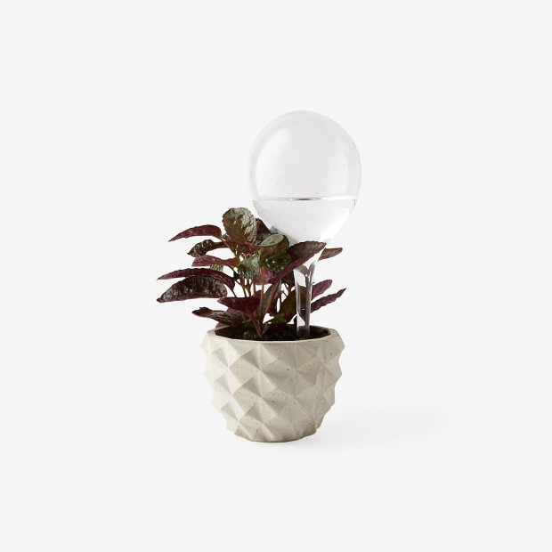 ALL_NA_ALL_WATERING_BULB